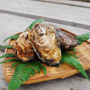 京都・舞鶴の牡蠣